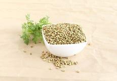 Sementes de coentro saudáveis do alimento em uma bacia Fotos de Stock