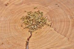 Sementes de erva-doce em um cruz-corte uma árvore Imagens de Stock