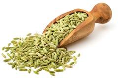 Sementes de erva-doce secadas na colher de madeira verde-oliva, isolada no branco imagem de stock royalty free