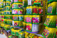 Sementes de flor imagens de stock royalty free