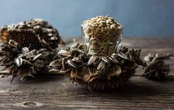 Sementes de girassol em uma flor do girassol Fundo escuro Fotos de Stock