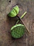 Sementes de Lotus na madeira velha Imagens de Stock