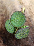 Sementes de Lotus na madeira velha Fotos de Stock Royalty Free