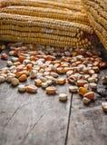 Sementes de milho amarelas Fotografia de Stock Royalty Free
