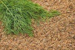 Sementes do aneto e da erva daninha de aneto verde fresca fennel fotografia de stock royalty free