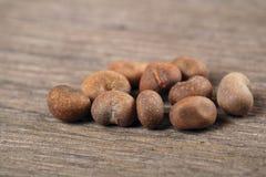 Sementes do Baobab Imagem de Stock Royalty Free