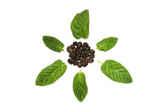 Sementes do café com folhas Imagem de Stock Royalty Free