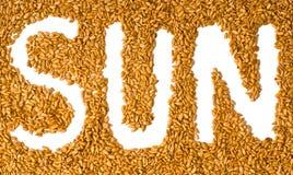 Sementes do girassol com o sol da palavra escrita Foto de Stock Royalty Free