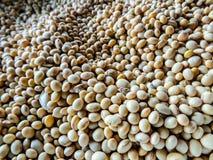 Sementes do grão de soja fotos de stock