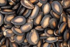 Sementes do melão Fotografia de Stock