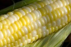 Sementes do milho Fotografia de Stock Royalty Free
