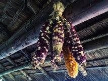Sementes do milho Imagem de Stock