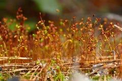 Sementes do musgo nas caixas Fotos de Stock