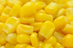 Sementes do Sweetcorn Imagens de Stock