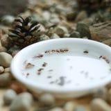 Sementes dos bonsais em uma placa branca com cone Fotos de Stock