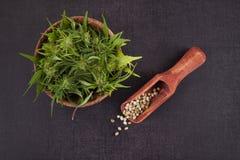 Sementes e botão do cannabis Fotografia de Stock