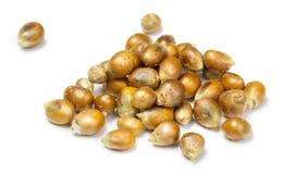 Sementes fritadas do milho Fotografia de Stock
