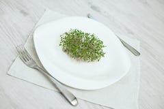 Sementes Sprouted alface do agrião da semente dos brotos verdes fotografia de stock