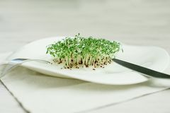Sementes Sprouted alface do agrião da semente dos brotos verdes foto de stock