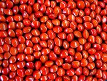Sementes vermelhas Fotos de Stock