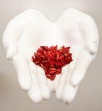 Sementes vermelhas nas mãos Fotos de Stock Royalty Free