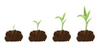 Semenzale o germinazione Immagini Stock