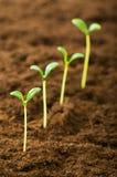 Semenzale verde - concetto di nuova vita Fotografie Stock Libere da Diritti