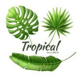 Semester för realistiska tropiska sidor för vektor exotisk stock illustrationer