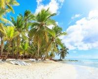 Semester i Dominikanska republiken Royaltyfri Foto