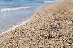 Semestern kopplar av begrepp, havslandskap med skalet och vågor Royaltyfri Foto