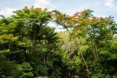 Semesterort i regnskog Royaltyfri Bild