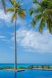 Semesterortpöl med palmtree Arkivbilder