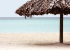 Semesterortpalmträd på stranden royaltyfri fotografi