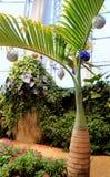 Semestra inställningen med tropiska träd och exotiska orkidér som gör vägen för jul som dansar vingfjärilshuset, det starka musee Arkivfoto