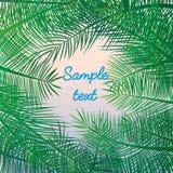 Semestrar den exotiska semesterorten för palmbladbakgrund havet Arkivbilder