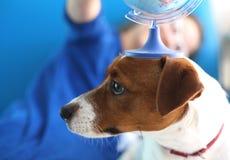Semestrar med en hund, hur man planerar din tur? Arkivbild