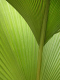 Semi-abstract green palm fronds Royalty Free Stock Images