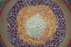 Semi asciutti del cereale in piatto dell'argilla Fotografia Stock Libera da Diritti
