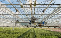 Semi-automatic spraying robot in a greenhouse Royalty Free Stock Photography