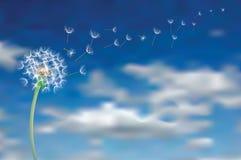 Semi in cielo illustrazione vettoriale