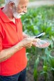 Semi d'esame senior del cereale dell'agricoltore o dell'agronomo in un campo fotografia stock libera da diritti