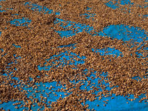 Semi del cacao immagini stock libere da diritti