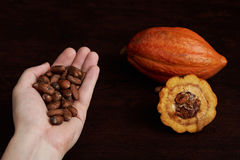 Semi del cacao in mano della palma Fotografie Stock Libere da Diritti