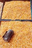 Semi del cereale Fotografia Stock Libera da Diritti