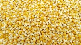 Semi del cereale come fondo fotografia stock libera da diritti