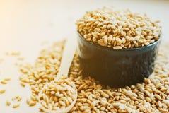 Semi del grano dell'orzo perlato Fotografie Stock Libere da Diritti