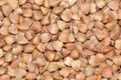 Semi del grano saraceno Fotografia Stock