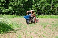 Semi del grano saraceno della scrofa dell'agricoltore nel campo con il trattore Fotografia Stock