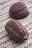 Semi del jojoba (Simmondsia chinensis) Fotografia Stock Libera da Diritti