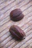 Semi del jojoba (Simmondsia chinensis) Immagini Stock